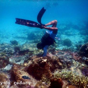 Menyelam di Pulau Redang (Scuba Diving)